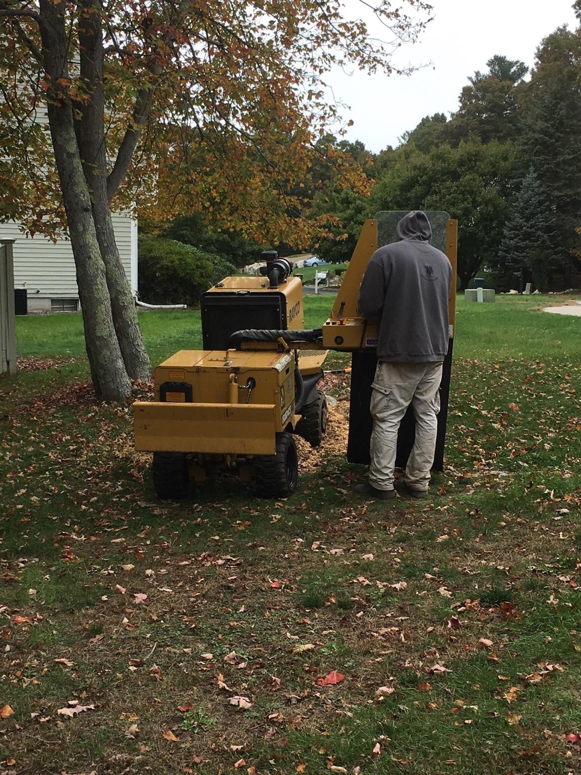 sg tree u0026 stump grinding tree trimming tree removal shrub