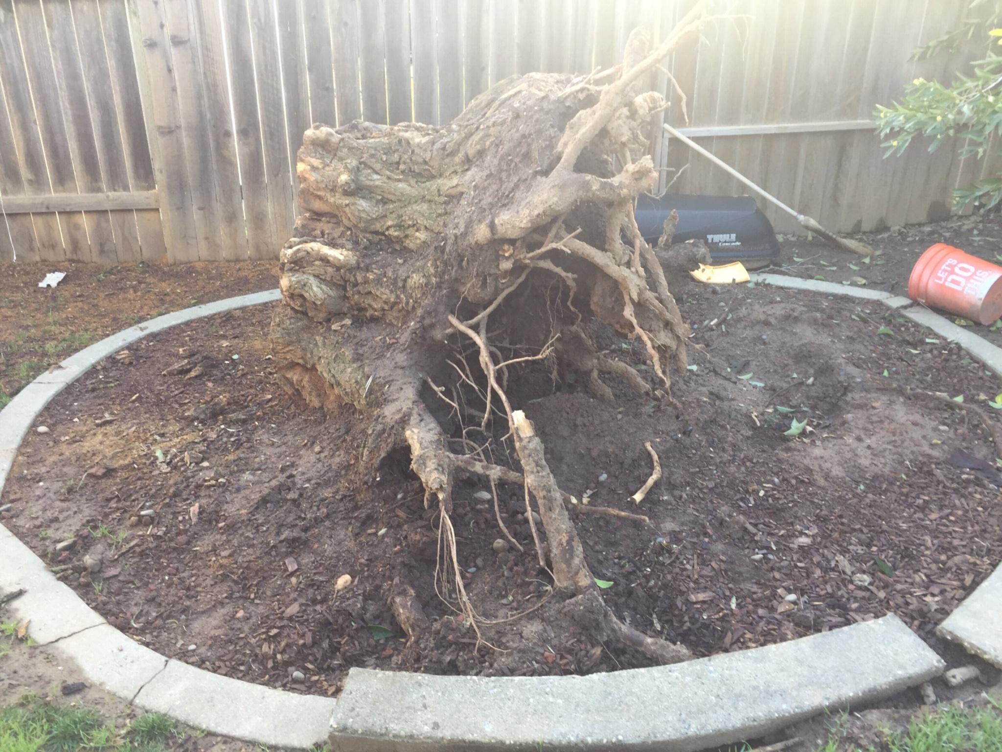 mercado u0027s tree service west sacramento ca
