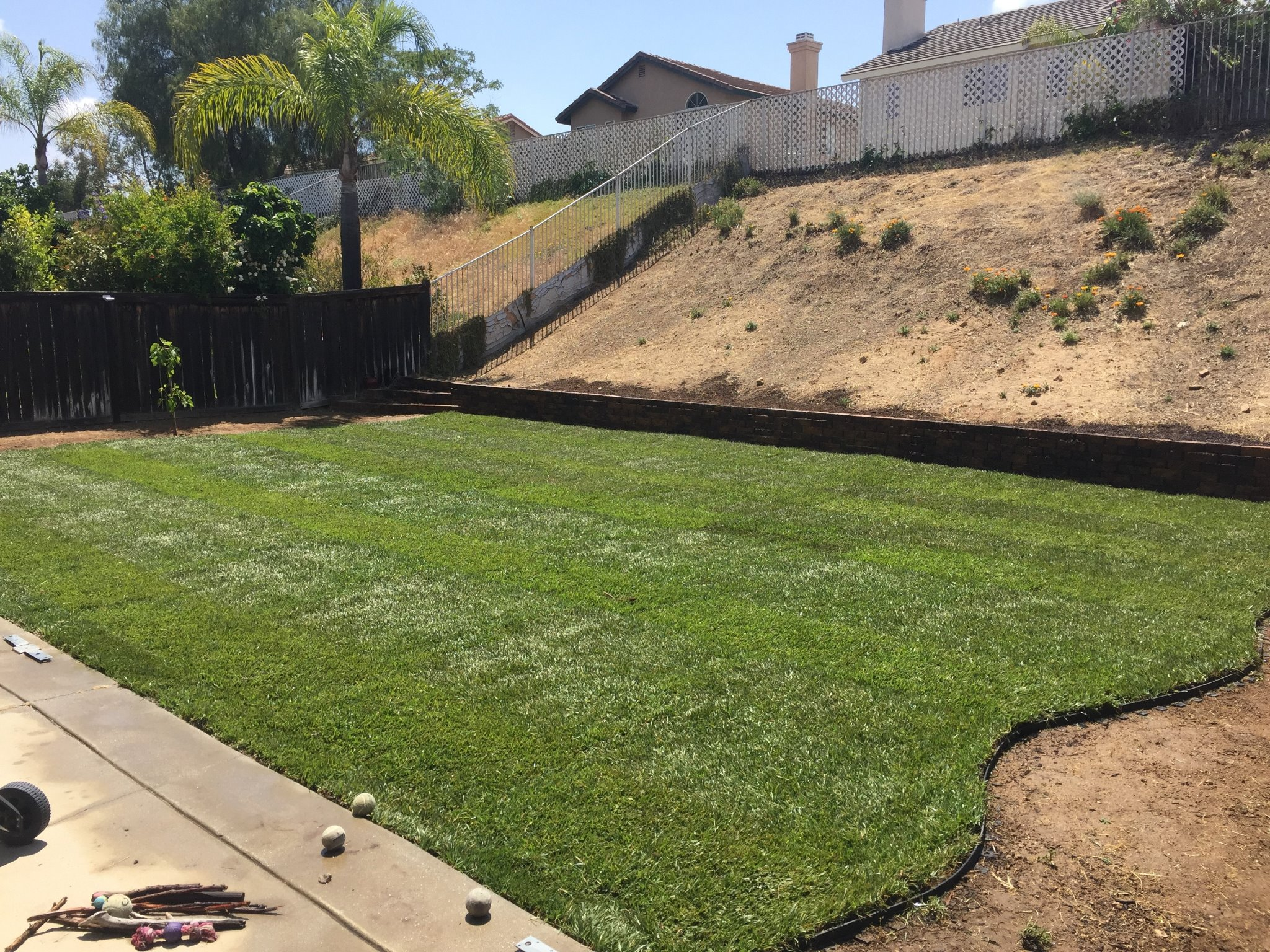 regs tree and lawn services corona ca