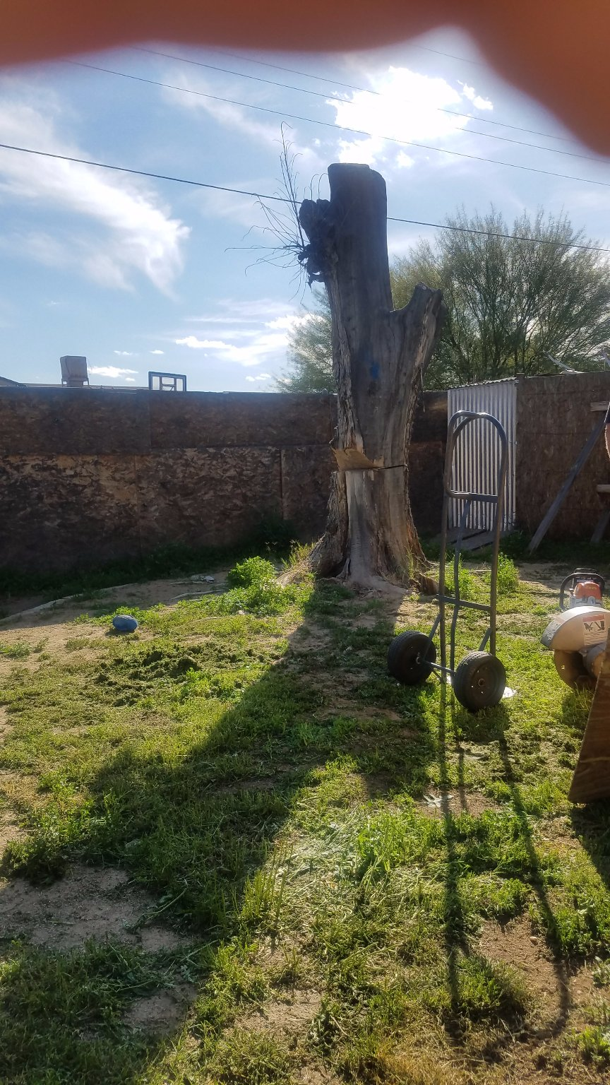 bob u0026 al u0027s tree care tolleson az
