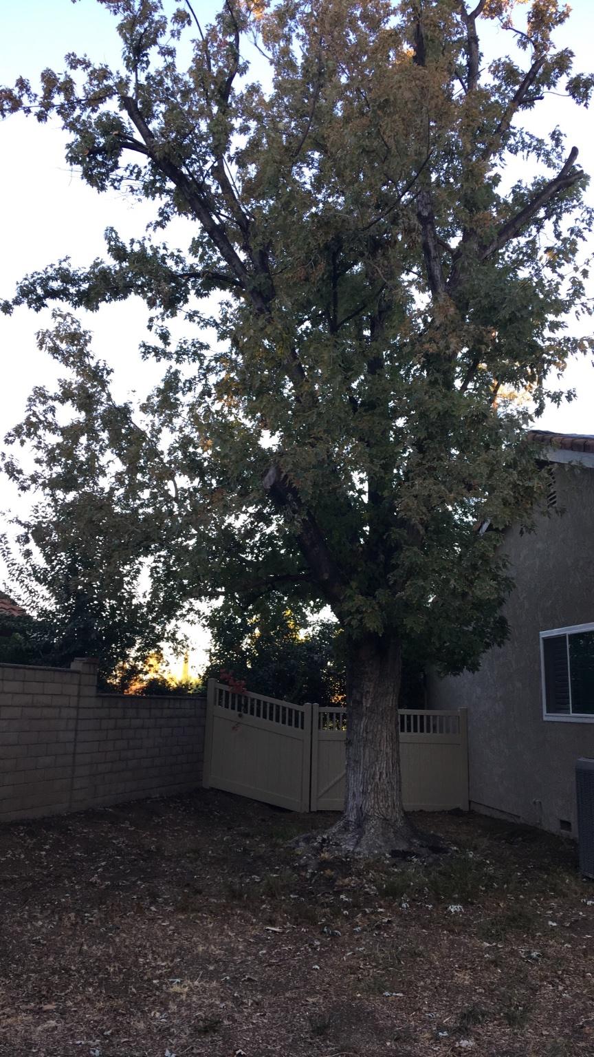 manny tree care san bernardino ca