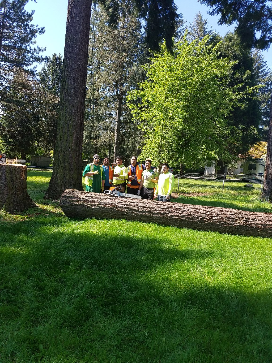 kjs tree care portland or