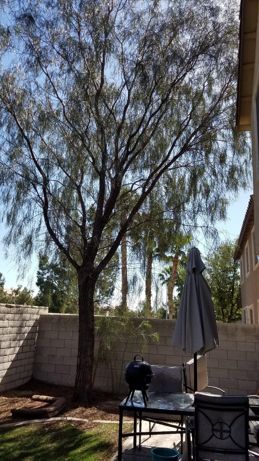 mba landscaping u0026 lawn service sprinkler repairs tree service